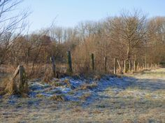 winterliche Wiesen am Rhein bei Worringen, Foto: S. Hopp