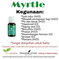 Kegunaan myrtle youngliving essential oil #Myrtle_single oil#youngliving id#youngliving indonesia #ylindonesia