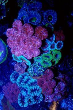 cool #tropicalfishsaltwater #tropicalsaltwateraquarium #SaltwaterAquariumSetup