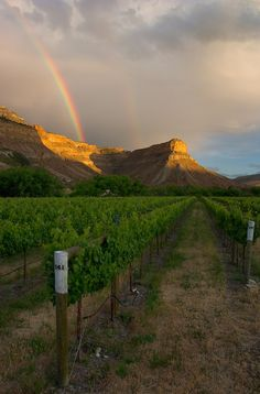 """""""Palisade Sunset"""" by Nat Coalson. A double rainbow catches the setting sun over Horse Mountain and the Canyon Wind vineyard in Palisade, Colorado."""
