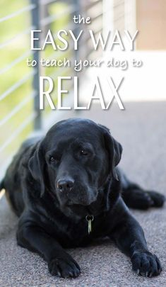"""Dog Breeds A relaxed dog is a happy dog. Here are some tips to help you - In """"Relax My Dog"""" you'll find a really quick and easy technique to help your Labrador to be a more relaxed dog around the home. Dog Separation Anxiety, Dog Anxiety, Dog Training Techniques, Dog Training Tips, Training Quotes, Running Training, Potty Training, Strength Training, Relaxed Dog"""
