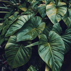 """Missing some colours on my Instagram🌿 #Bali #indonesia #asia #nature #naturelovers #nikon #nikonphotography #travelblogger #travelgram #visitindonesia #ubud #jungle #plants🌿"" by @wanderitphoto (WANDER IT). #turismo #instalife #ilove #madeinitaly #italytravel #tour #passportready #instavacation #natgeotravel #mytinyatlas #traveldeeper #travelawesome #travelstoke #travelwriter #lonelyplanet #instalive #ilovetravel #instatravelling #getaway #globetrotter #travelandlife #traveldiary…"
