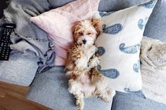 Vogue For Fashion I Love Dogs, Puppy Love, Dog Day Afternoon, Cute Creatures, Live Life, Fur Babies, Dog Cat, Cute Animals, Wildlife