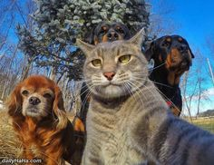 cool Selfie Of The Whole Crew