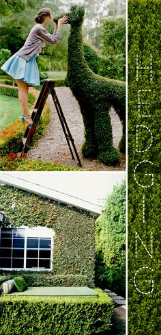 creative hedging - it would be really fun to have an animal topiary in the garden...