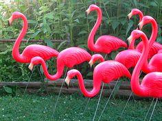 Plastic lawn flamingos