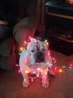 This festive man. | 31 Photos That Prove Bulldogs Are Beautiful