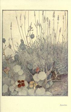 Nasturtium, The Flower Book, Anne Constance Smedley Armfield, 1910 Botanical Illustration, Botanical Prints, Illustration Art, Woodland Flowers, Gardening, Beauty Art, Flower Art, Book Art, Art Photography