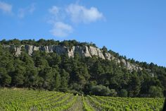 """Sleeping Beauty: La Clape Awakens to a Crown 