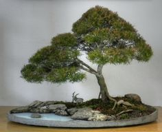 This links to a tutorial on how to make the penjing AND the tray, from styrofoam and concrete. AMAZING!!!!! It's in Portugese, love me the Google Translate