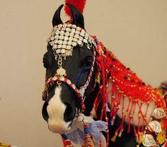 NAN 2011 - Tucson, AZ | by appaloosa  Marwari horse