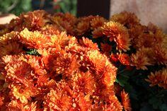 Herbsttraum in kupfer-orange
