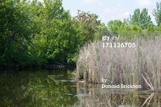 Stock Photo : tranquil water scene nature background