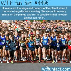 Humans can out run all animals -   WTF fun facts