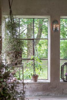 Feng Shui, Greenery, Windows, Garden, Chicken, Pretty, Plants, Lawn And Garden, Tuin