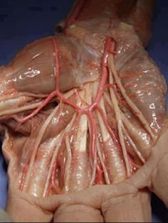 Anatomy of a hand. So gross looking! I actually got heebey geebies!