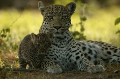 """Nat Geo Wild 