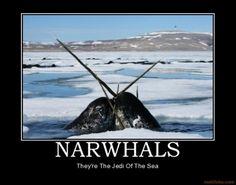 Cat Whale Interesting Meme