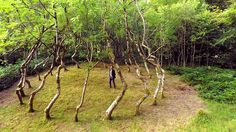In 1977, sculptor David Nash cleared an area of land near his home in Wales where he trained a circle of 22 ash trees to grow in a vortex-like shape for an artwork titled Ash Dome. Almost 40 years later, the trees still grow today. The artist has long worked with wood and natural elements in his