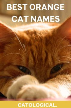 Orange/ red/ ginger cats are widespread all over the planet. These fiery kitties of various shapes and sizes can come from a number of feline breeds, which is yet another reason why so many pet parents prefer them next to furballs of other colors. #CatNames #CatIdeas #CatNameIdeas #KittenNames #KittenNameIdeas #KittenIdeas Girl Cat Names, Pet Names, Orange Cats, Blue Cats, Orange Red, Japanese Cat, Kitten Care, Unique Cats, Cat Sleeping