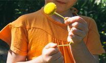 Mango cotton daisy tee