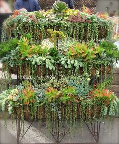 The secret of the pretty gardens Hanging Succulents, Succulent Display, Succulent Wall Gardens, Succulent Ideas, Succulent Planters, Tall Succulents, Succulent Arrangements, Succulents In Containers, Growing Succulents