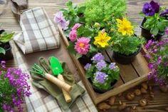 Ting å huske på når du skal plante om planter Garden Equipment, Flower Pots, Flowers, Watering Can, Street Art, Planters, Plants Indoor, Patio Design, Vegetable Gardening