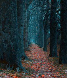 Path by Phsycloner