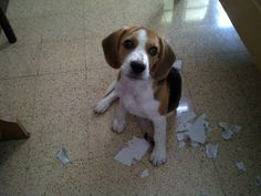 I TOLD you the dog ate my homework!