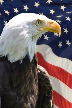 Show Your Respect & Loyalty with Patriotic Tattoos American Flag Pictures, Patriotic Pictures, American Flag Eagle, American Freedom, American Pride, American Photo, Eagle Images, Eagle Pictures, American Flag Wallpaper