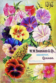1898 Barnard Popular Vintage Flowers Seed Packet Catalogue Advertisement Poster  | Collectibles, Advertising, Merchandise & Memorabilia | eBay!