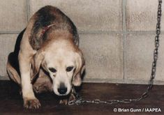 Animal Experiments Pictures