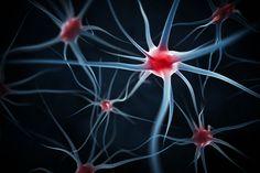 Les 30 neurones qui peuvent calmer nos douleurs / Un modeste groupe de trente neurones constitue une sorte de centre de contrôle de la douleur dans notre cerveau / Le centre de contrôle de la douleur dans le cerveau ne comprend que 30 neurones installés dans l'hypothalamus, qui coordonnent la diffusion de l'ocytocine, une hormone aux propriétés analgésiques. © Leigh Prather, Shutterstock