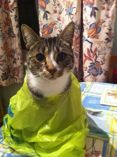 And this kitty who's just wearing this bag as a fashion statement. | 19 Cats Who Are Beautiful Furry Idiots