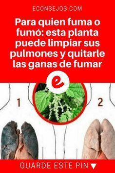 Dejar de fumar | Para quien fuma o fumó: esta planta puede limpiar sus pulmones y quitarle las ganas de fumar | Este es un extraordinario tip para quien fuma o fumó: una planta que además de desintoxicarte los pulmones, ayuda a eliminar las ganas de fumar. Lea y sepa cómo usarla