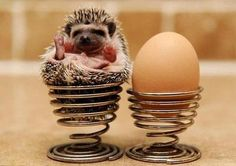 little hedgehog!