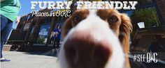 Here's a collection of places in OKC where furry friends are welcome.