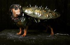 A lovebug! LoL