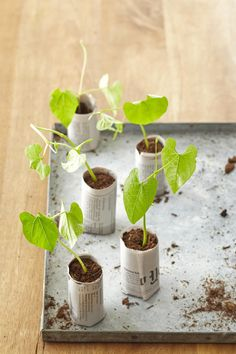 4 DIY Seed-Starting Pots You Can Make With Items You Already Have - Garden Care, Garden Design and Gardening Supplies Comme Des Garcons, Seed Starting, Diy Garden Decor, Diy Decoration, Cookies Et Biscuits, Better Homes And Gardens, Garden Projects, Houseplants, Home And Garden