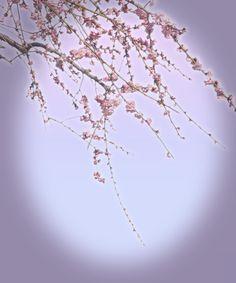 花のイメージ遺影素材