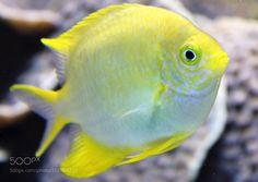 Yellow by Olga-Fleur #nature #photooftheday #amazing #picoftheday #sea #underwater