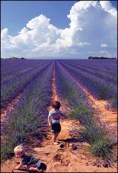 children in the lavander fields, Valensole, France