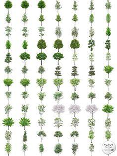 Árboles en PNG de alta resolución (PNG Transparent Trees) | Recursos 2D.com