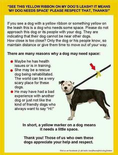 Yellow Ribbon on leash  means - dog needs space!