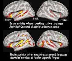 spanish school-brain activity in bilinguals  http://chac-mool.com/  Instituto Chac-Mool Privada de la Pradera #108 Colonia La Pradera Cuernavaca, Morelos, México, 62170 Teléfono: 01 777 317 2555  Spanish Schools in Mexico And Costa Rica  1 (480) 338 5147