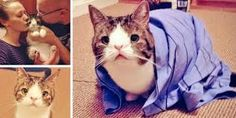cat without a nasal bridge - Google Search