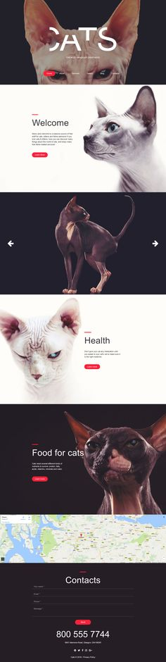 Cat Responsive Moto CMS 3 Template - http://www.templatemonster.com/moto-cms-3-templates/cat-responsive-moto-cms-3-template-59276.html