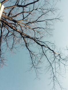 Tree Abstract, Artwork, Work Of Art, Summary