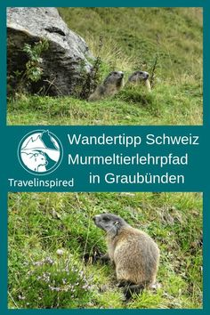 Viamala: On the trail of marmot and capricorn Switzerland Destinations, Travel Destinations, Hidden Places, Viewing Wildlife, Need A Vacation, Romantic Travel, Family Travel, Hiking, Safari