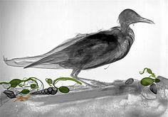 Image: Seagull. (© Arie van 't Riet)